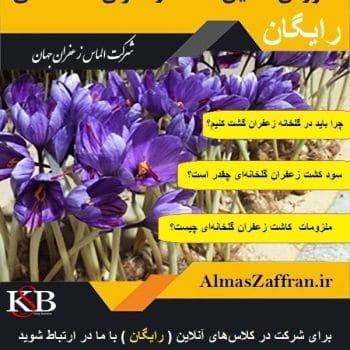 آموزش آنلاین و رایگان کشت زعفران گلخانه ای