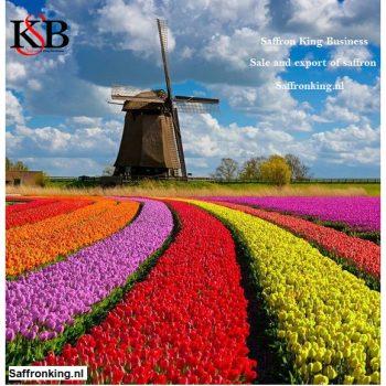 قیمت زعفران به هلند