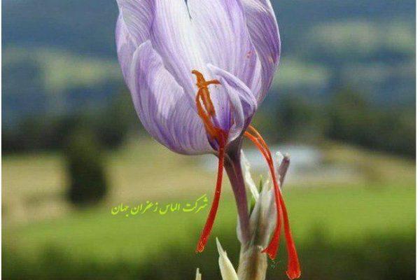 قیمت فروش زعفران - Today's prices for saffron