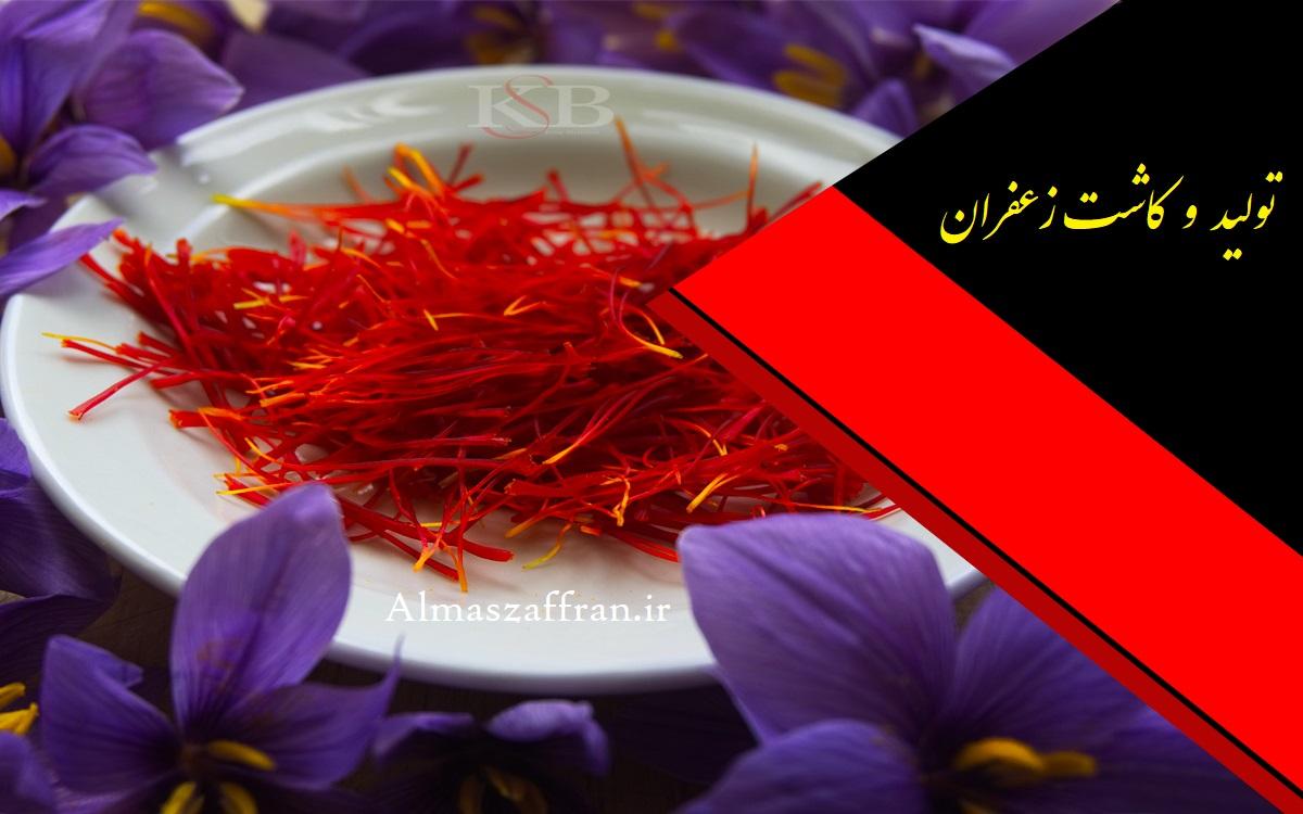 فروش زعفران و قیمت انواع زعفران در 2019 price of saffron in 2019