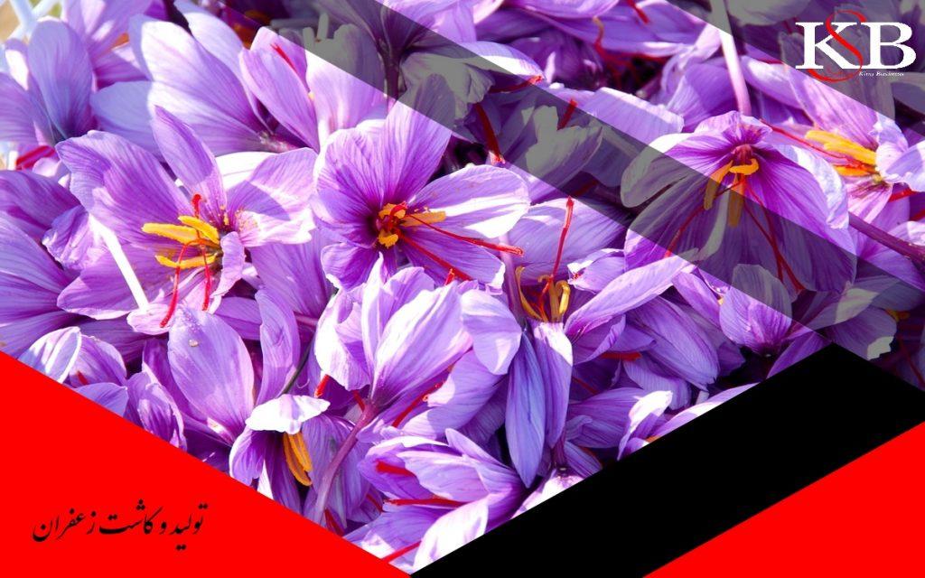 صادرات زعفران به اروپا